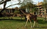 Disney's Animal Kingdom Lodge - Kidani Villas