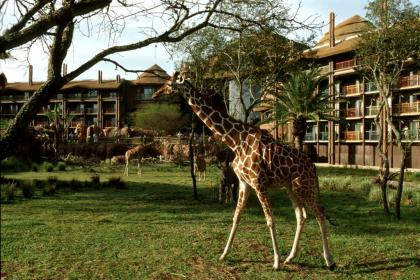 Disney's Animal Kingdom Lodge Room view
